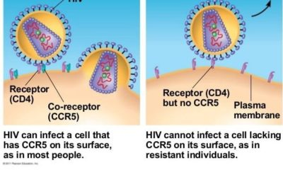 New technique: It involves iPS cells from HIV-resistant individuals for the treatment of people infected with the virus. Authors demonstrated iPS resistance