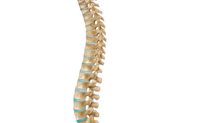 spinal cord therapies