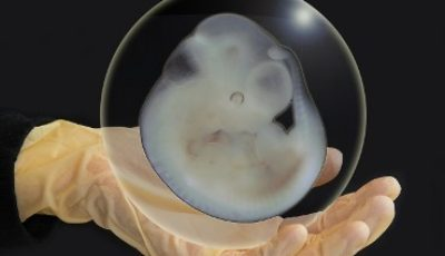 Banning clinical and human embryos experimentation and revocation of consent to assisted procreation after fecundation in Italy.