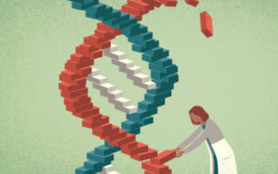 germline gene editing heritable risks