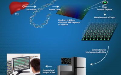 genome sequencing in healthy persons