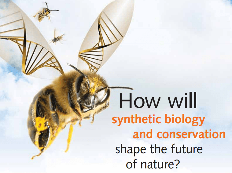 From a Synthetic biology bioethics perspective. New organisms which value must be considered to preserve the ecosystem and the environment.