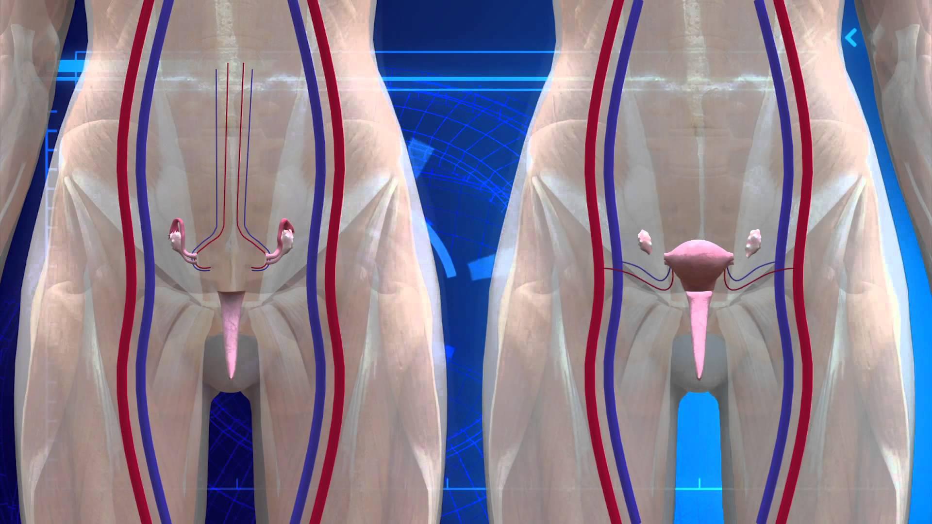 Bioethics Obervatory  U2013 Institute Of Life Sciences  U2013 Ucv Uterus Transplant Between Twin Sisters