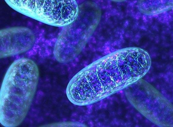 People with biparental mitochondria have been discovered, which questioned the biological dogma that only mother's mitochondria are inherited