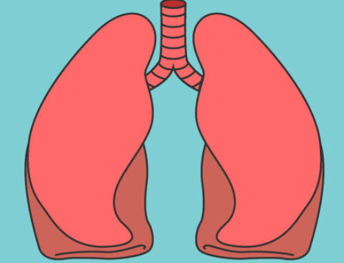 Functional lungs produced in mice which technique could be useful for human transplants