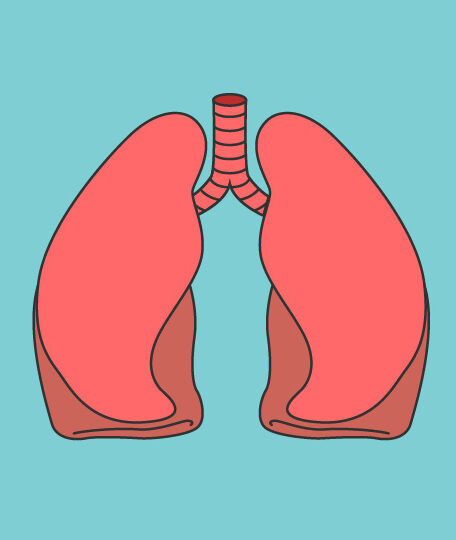 Lungs transplant new possibilitieshese. These results could pave the way to producing artificial organic lungs for human transplant.