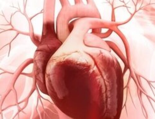 Discover of the cells responsible for repairing the damage after heart attack