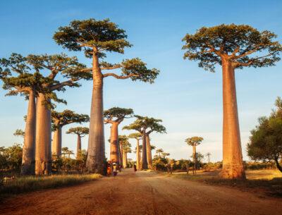 Biological diversity conservation