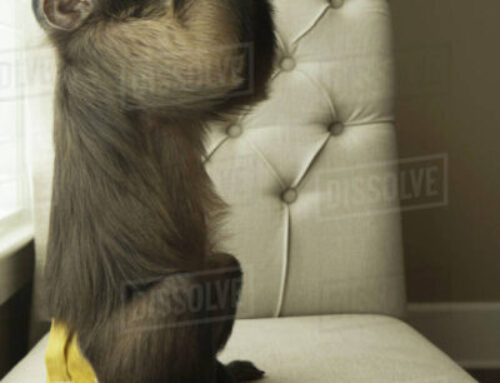 Animal testing. Alcohol early gestation drinking affects areas of the fetal brain in monkeys