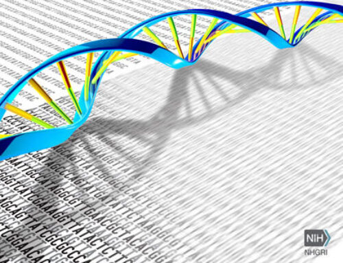 A new era in genomics research. Whole genome sequencing of a human chromosome is obtained for the first time