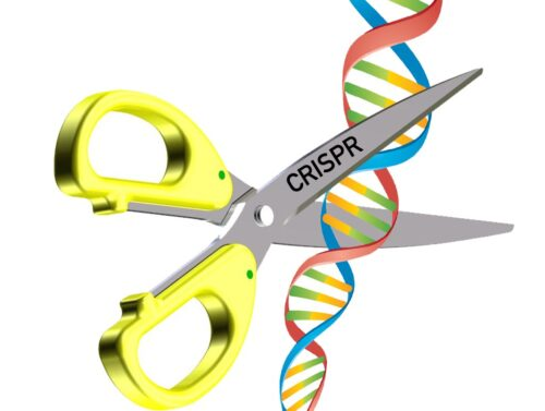 Genome editing reproductive option