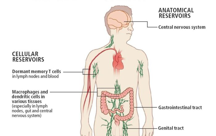 antiretroviral therapy left reservoirs
