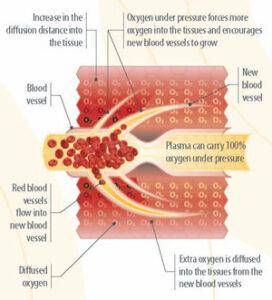 blood vessel bioregeneration