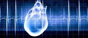 3D bioprinted heart