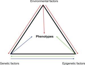 hereditary nongenetic factors