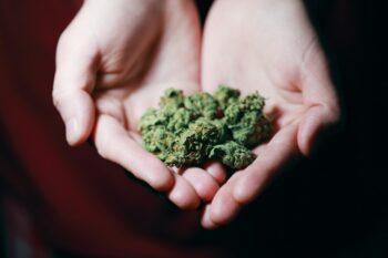 cannabis neurological harmful effects