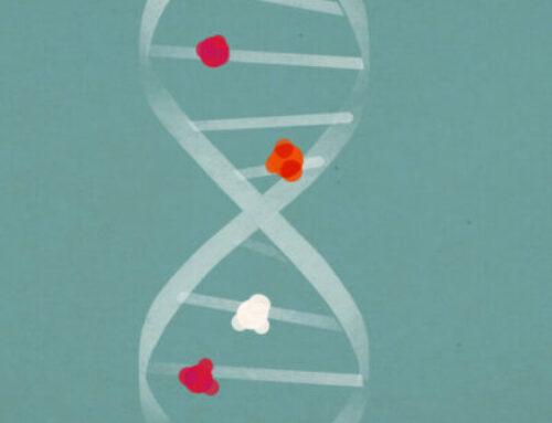 Epigenetics of the early development of the human embryo and transgenerational inheritance studies