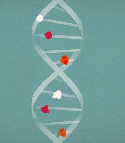 Transgenerational epigenetic inheritance researches
